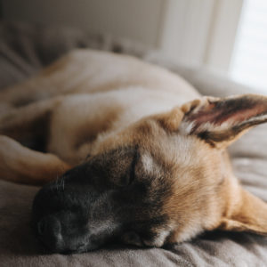 Perro durmiendo plácidamente en cama para mascotas NIX Pinky